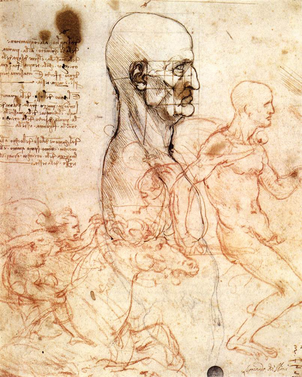 Leonardo Da Vinci Anatomical Drawings Head
