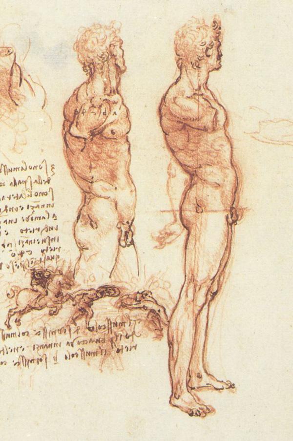 Leonardo da Vinci - Anatomical drawings - Male anatomy