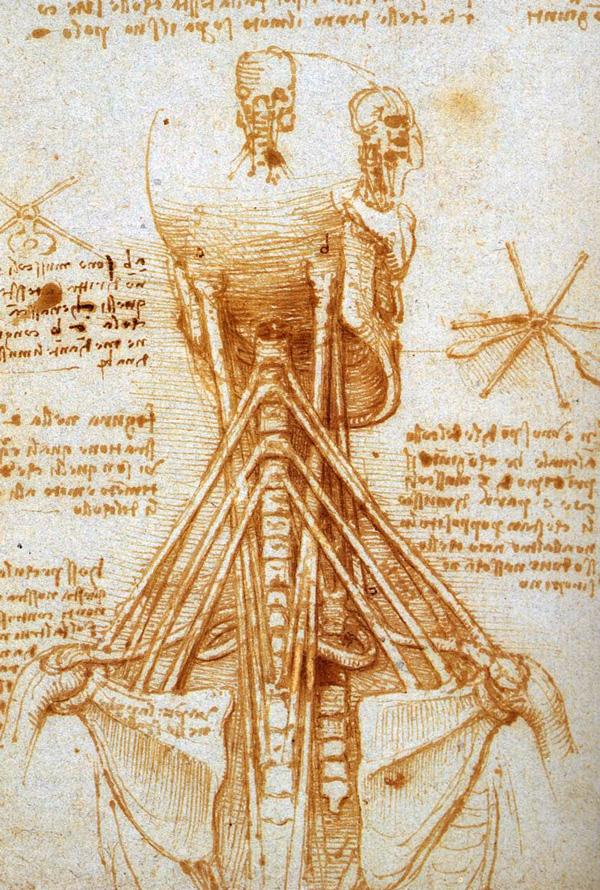 Leonardo Da Vinci Anatomical Drawings Neck