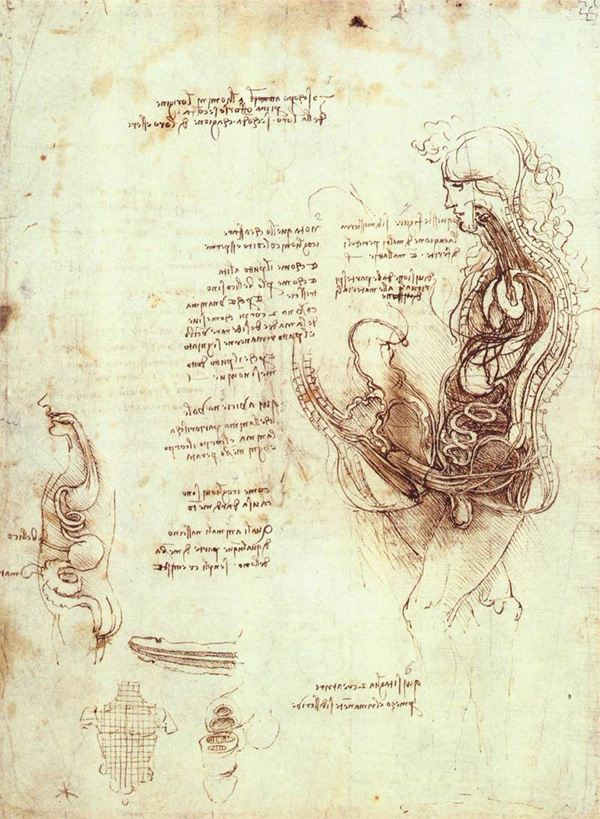 Leonardo Da Vinci Anatomical Drawings Copulation
