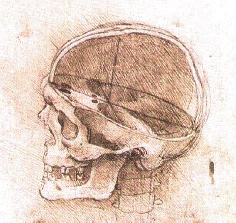 Cráneo abierto