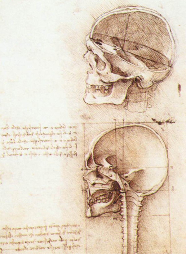 Leonardo da Vinci - Anatomical drawings - Skull
