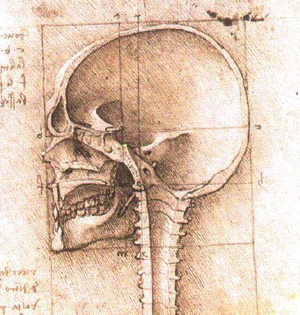 Leonardo Da Vinci Anatomical Drawings Skull